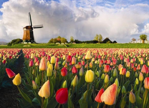 Netherlands Top 20 Highest Millionaires