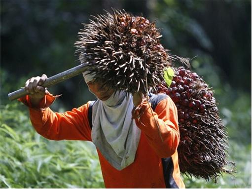 Felda Palm Oil Workers