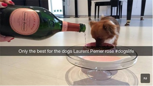 Rich Kids of SnapChat - Dogs drink Laurent Perrier