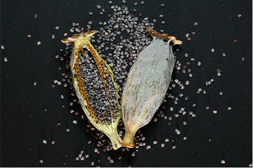 China Opium-Laced Noodle - Opium Poppy Seeds