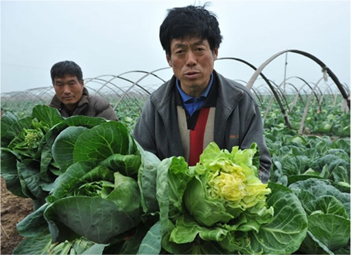 China Steel As Cheap As Cabbage