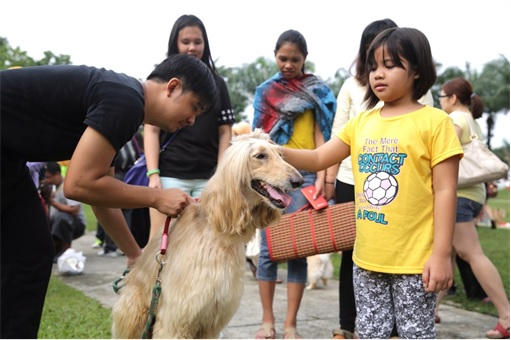 Malaysia I Want To Touch A Dog Event - Muslim Small Girl Touching A Dog