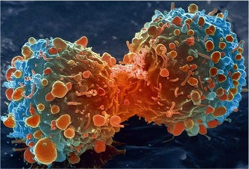 Cancer Cell Splitting
