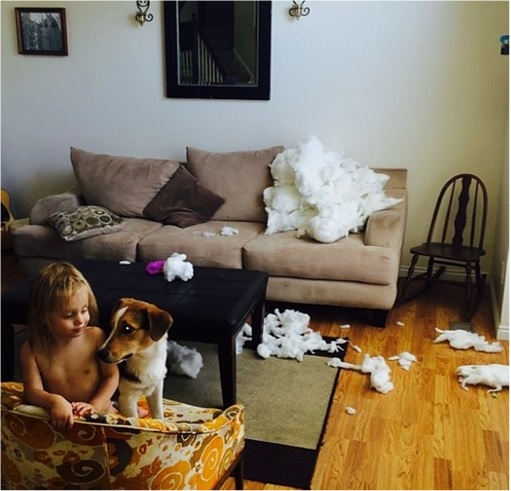 Kids Are The Worst - With Dog After Damage Sofa