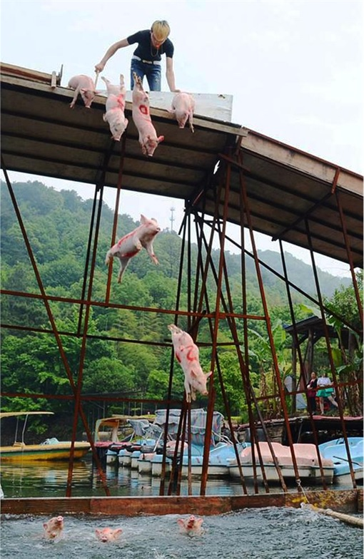 China Animal Cruelty - Man Pushing Pigs Into Lake