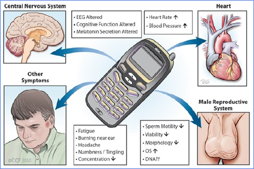 cell phone effects on the human brain essay