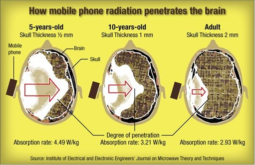 How Mobile Phone Radiation Penetrates Brain