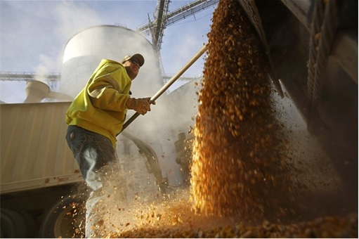 US Bumper Harvests - Corn and Soybean