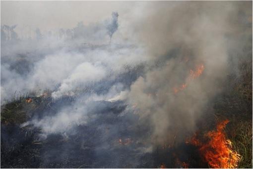 Haze Crisis - Flames Peat Fires Burning