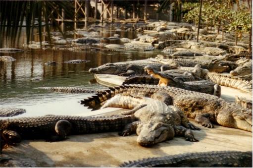 Indonesia New Prison - Crocodiles Guarding Drug Traffickers
