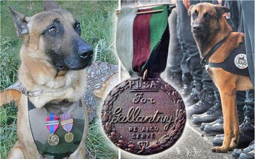 Paris Saint-Denis RAID - Diesel Police Dog Medal