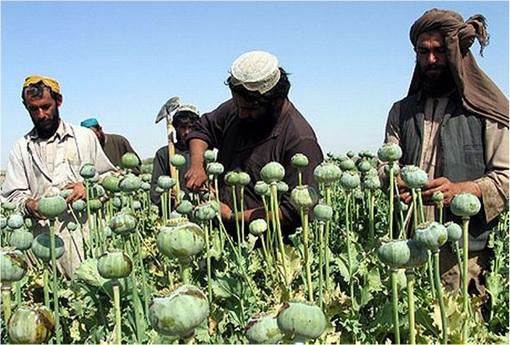 ISIS Poppy Plantation