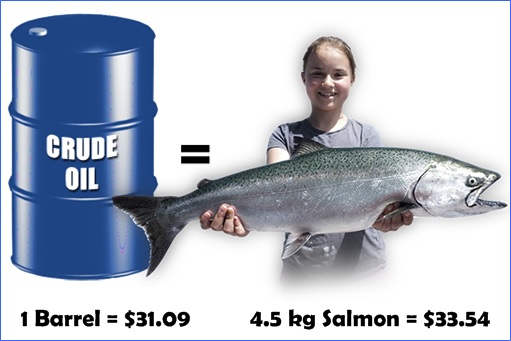 Norway - One Barrel Oil Cheaper Than One 4.5-kg Salmon Fish