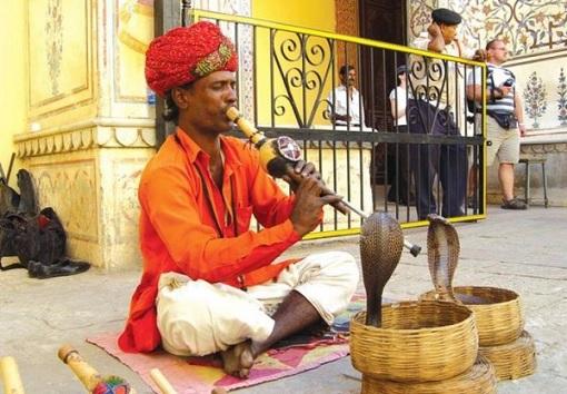 Indian Snake Charmer Charming Cobra Snake