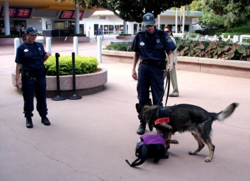 Orlando Florida Disneyland Security - Dog Sniffing Bags