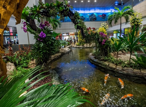 Singapore Changi Airport - Koi Pond