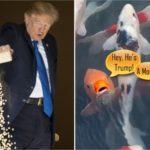 Forget Kim's Missiles - Trump's Fish Feeding Stunt Sends Netizens Ballistic