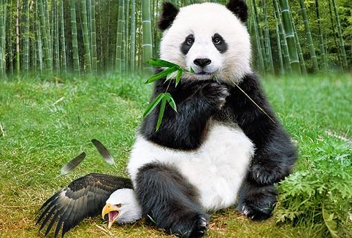 China Has Overtaken US as World Largest Economy - Panda Sits On Eagle
