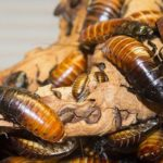 Only In China - The World's Largest Insect Farm, Producing 6 Billion Cockroaches Annually