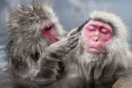 President Donald Trump Wipes Dandruff Off President Emmanuel Macron Shoulder - Primate Grooming