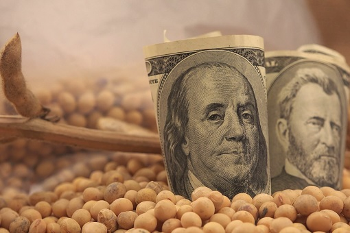 United States Soybean - US Dollar