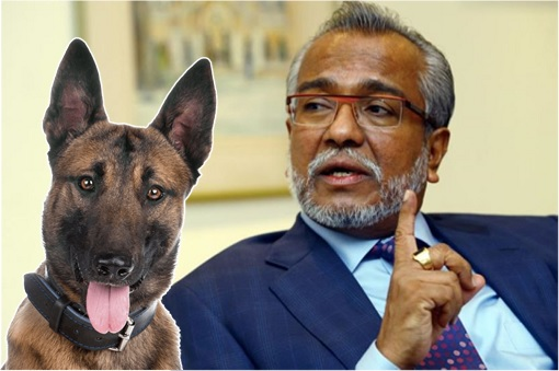 Lawyer Shafee Abdullah - Dog Belgian Malinois Shepherd