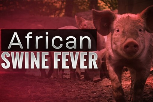 African Swine Fever - Pig
