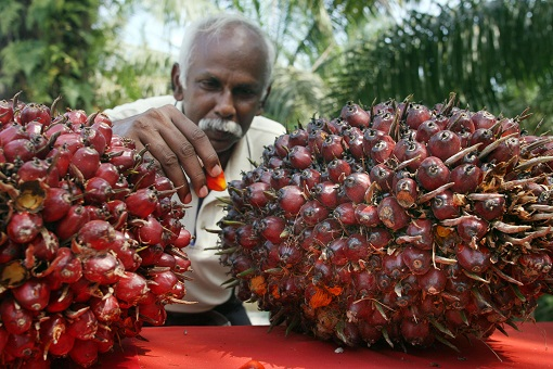 India Import Palm Oil From Malaysia