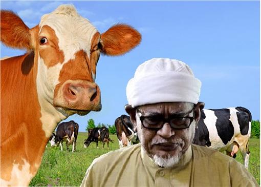 Hadi Awang - Herd of Cows