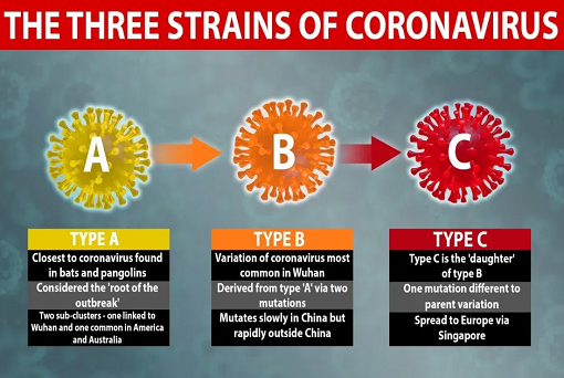 Coronavirus - 3 Variants - Type A, B and C