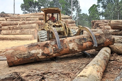 Sabah - Illegal Logging