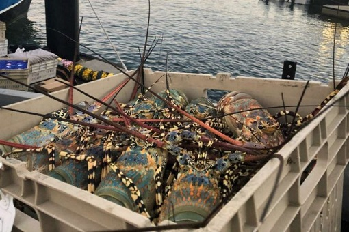 Australia Fisherman Lobster Industry