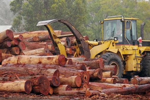 Australia Timber Industry