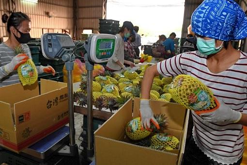 China Bans Taiwan Pineapple - Packing